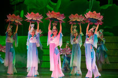 Lotus Dance Royalty Free Stock Photo