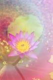 Lotus dans l'étang photographie stock libre de droits