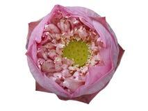 Lotus de beauté Photographie stock