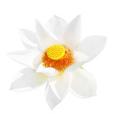 lotus de fleur photos stock