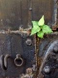 Lotus de nature de papier peint Image libre de droits