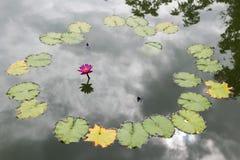 Lotus in de pool, de Bloem, de aardachtergrond of het behang Royalty-vrije Stock Afbeeldingen