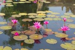 Lotus in de vijver royalty-vrije stock fotografie