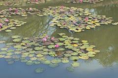 Lotus in de vijver stock foto's
