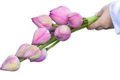 Lotus in der Hand Stockfotos