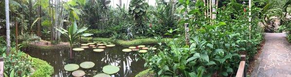 Lotus die vijver in een tuin drijven royalty-vrije stock fotografie