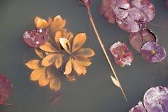 Lotus, e co imagens de stock royalty free