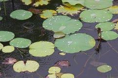 Lotus-Effekt Stockbilder