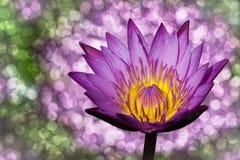 Lotus en Bokeh Royalty-vrije Stock Afbeeldingen