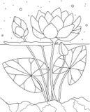 Lotus en el agua Página del libro de colorear Imagen de archivo