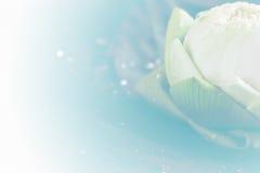 Lotus en la hoja Fotos de archivo