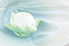Lotus en la hoja Imagenes de archivo