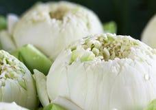 Lotus en la hoja Imagen de archivo