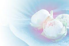 Lotus en la hoja Fotografía de archivo libre de regalías