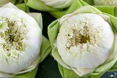 Lotus en la hoja Imagen de archivo libre de regalías