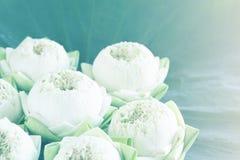 Lotus en la hoja Imágenes de archivo libres de regalías