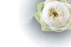 Lotus en la hoja Foto de archivo