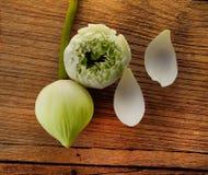 Lotus en la madera Imagen de archivo libre de regalías