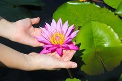 Lotus en la mano de la señora Imagenes de archivo