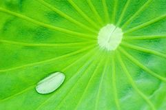 Lotus en regendruppel Royalty-vrije Stock Foto's