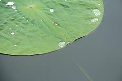 Lotus en Shangai Imagen de archivo libre de regalías