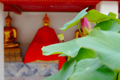 Lotus en Wat Pho, Bangkok, Thaïlande Photo libre de droits
