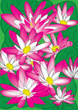 Lotus_eps. Illustration of Lotus flowers in a pond Stock Photo