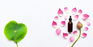 Lotus essential oil with lotus flowers on white background. Top view royalty free stock image