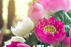 Lotus falsifica a flor e o fundo floral, flores de lótus feitas do fá Fotografia de Stock Royalty Free