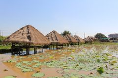 A lotus farm in Cambodia royalty free stock images