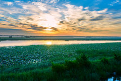 The lotus field and cloudscape and water Royalty Free Stock Photos