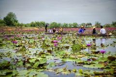 Lotus Floating Market rouge en Thaïlande Image stock