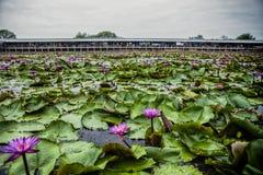 Lotus Floating Market rouge en Thaïlande Photographie stock libre de droits