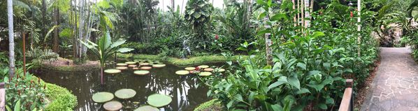 Lotus floating pond in a garden royalty free stock photography