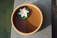 Lotus floating in water clay pot at spa Stock Photos