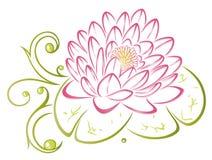 Lotus, flores, folhas
