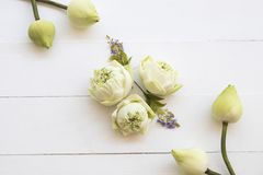 Lotus floresce a flora local do estilo colocado liso do arranjo de ?sia fotografia de stock