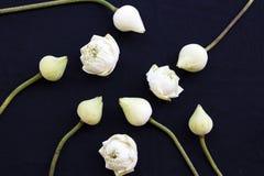 Lotus floresce a flora local do estilo colocado liso do arranjo de ?sia imagens de stock