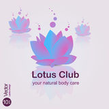 Lotus flovers Stock Photography