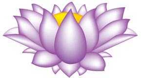 Lotus flower. Illustration of the lotus flower in purple colour stock illustration
