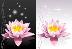 Lotus flower. Detailed  fresh lotus flower with reflection on black and white abstract oriental backgrounds with shining stars Royalty Free Stock Photo