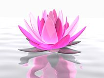 Lotus flower. 3d rendered illustration of pink lotus flower on water