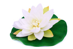 Lotus flower Royalty Free Stock Photo