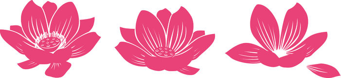Lotus Flower. Drawing of Three forms of the lotus Royalty Free Stock Photography