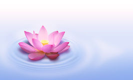 Lotus flower stock photos