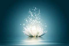 Lotus flower. Magic Lotus flower on water Stock Illustration