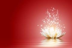 Lotus flower. Magic Lotus flower at red