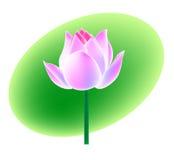 Lotus flower. Vector, illustrator, artistic drawing Stock Images