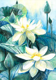 Lotus flower. White lotus flower.Picture I have painted by myself with watercolors