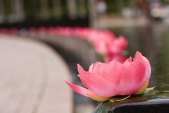 Lotus Flower. Material based lotus flower Royalty Free Stock Photo